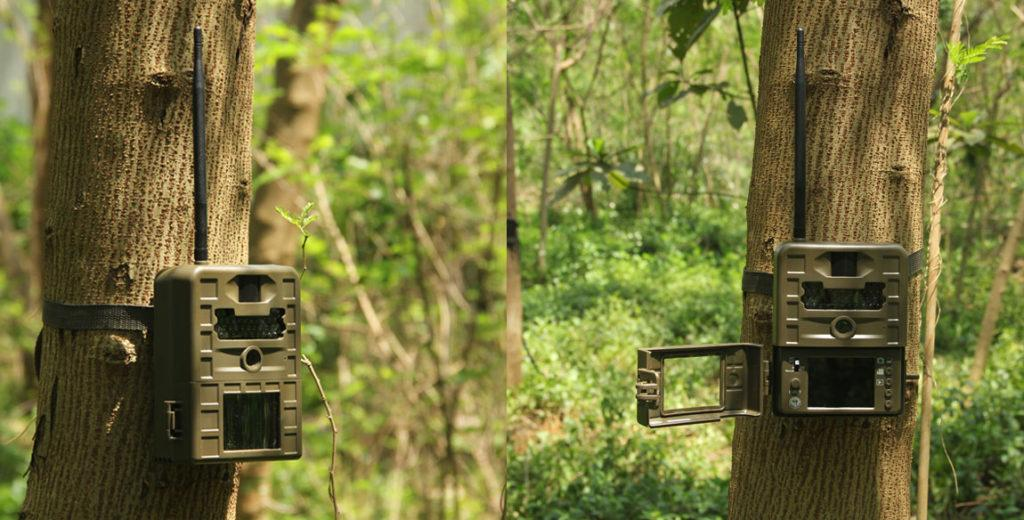 The Best Of Trail Camera